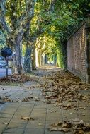 street with dry leaves