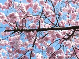 branches in flowers on a tree in spring