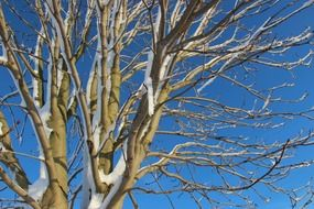 branches of snowy tree at blue sky