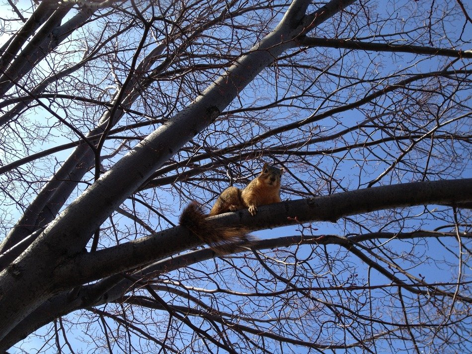 Climbing squirrel on a tree