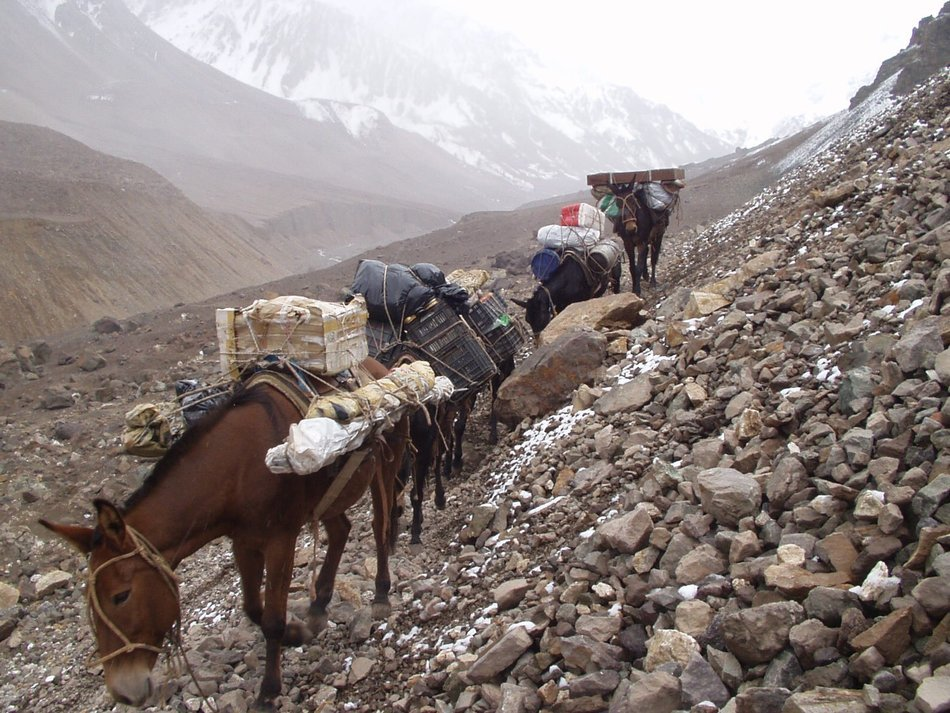 a herd of donkeys on an expedition in Argentina