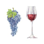 Grapes and red wine isolated on a white background