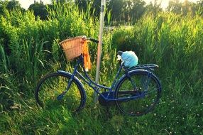vintage bicycle on a green meadow