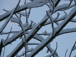 branch tree in the snow