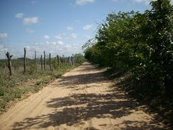 dirty path in countryside, Brazil