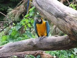 Colorful parrot in tropical forest