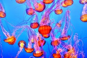 jellyfish colorful sea