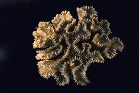 corals sea exoskeleton animal on black table