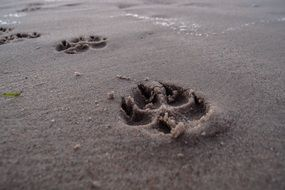 footprint beach dog