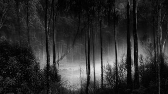 black and white photo of a mystical forest