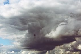 a bird in the gray clouds