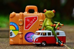 funny travel frog on holiday