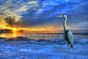 heron bird watching sunset on beach