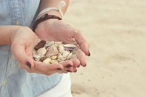 seashells in the hands of a woman