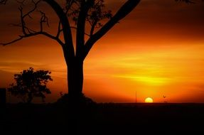trees against a bright sunset in Serengeti