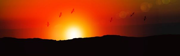 banner sunrise afterglow and birds