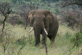 african elephant in the mountainsPilanesberg