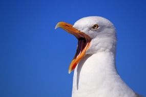 portrait of seagull blue sky holiday bird bill