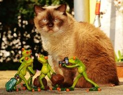 british shorthair cat and frogs
