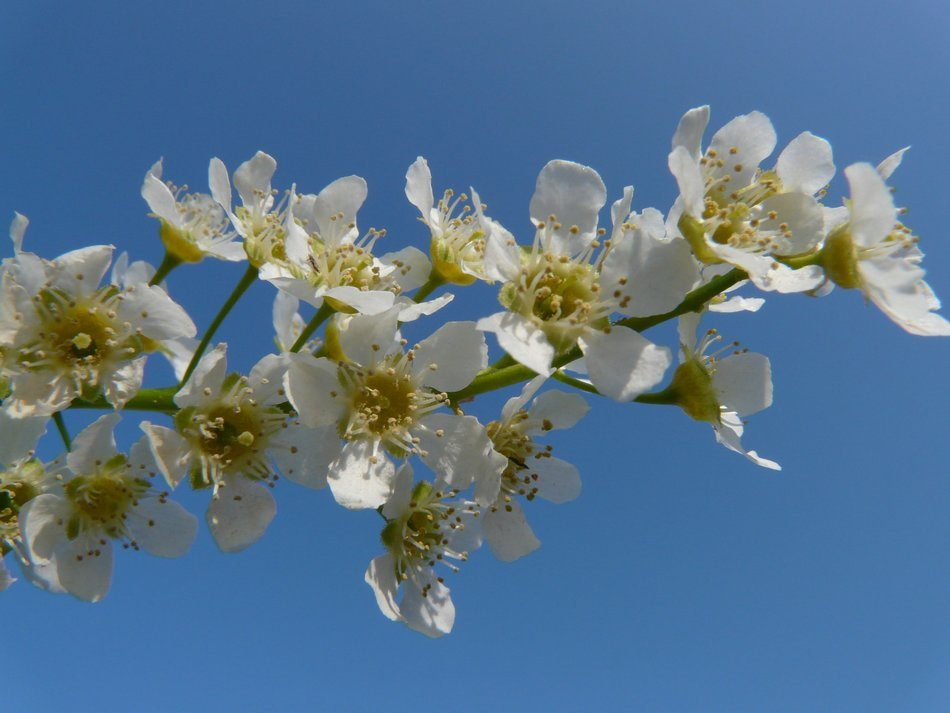 white flowers on a branch against the blue sky