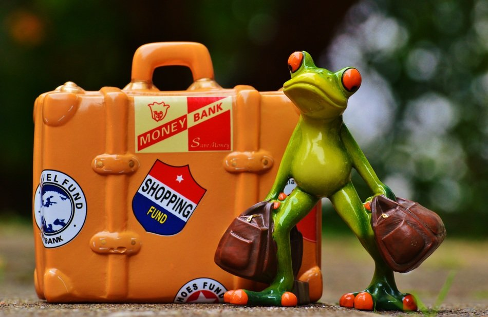 green frog near the suitcase