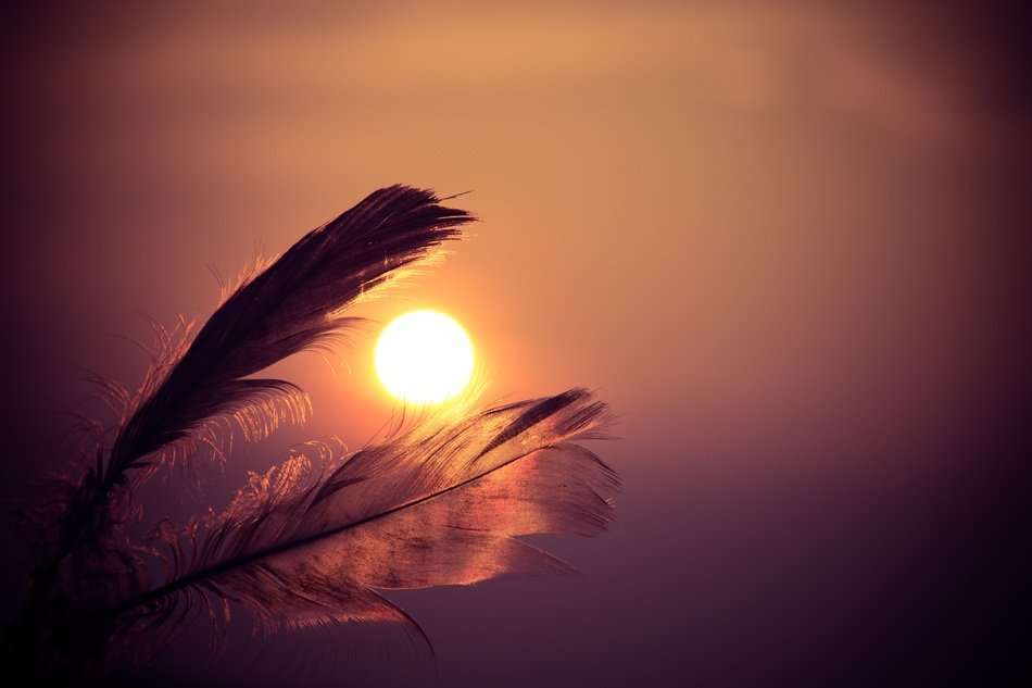 feathers beautiful orange sunset evening nature