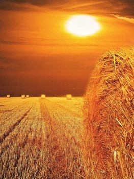 landscape of straw field at sunset