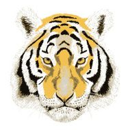 Vector Portrait of a Tiger Beautiful face big cat