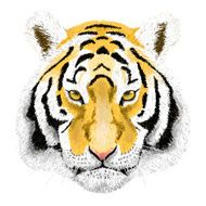 Vector Portrait of a Tiger Beautiful face big cat N2