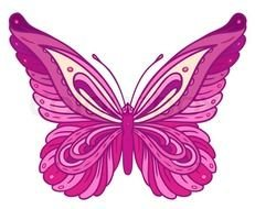 Pink Butterfly On White Vector Colourbox