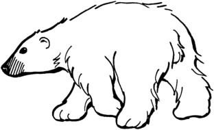 walking polar Bear, outline