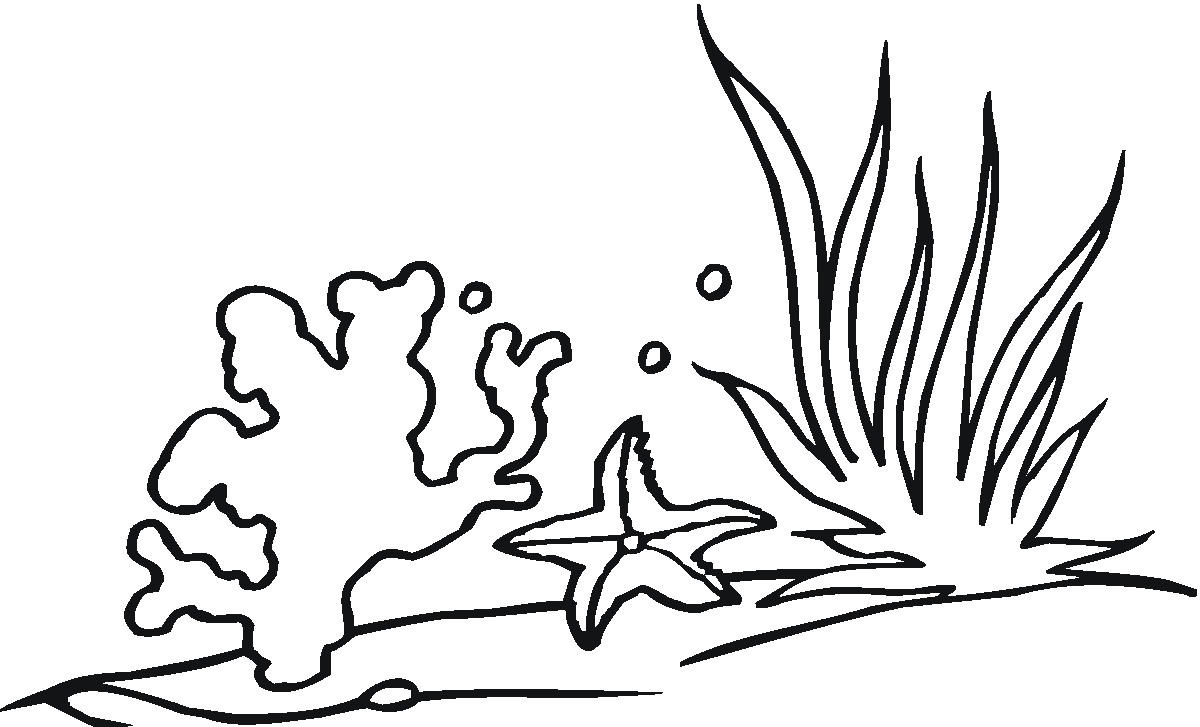 Seaweed Coloring Pages Sco Clipart Free Image