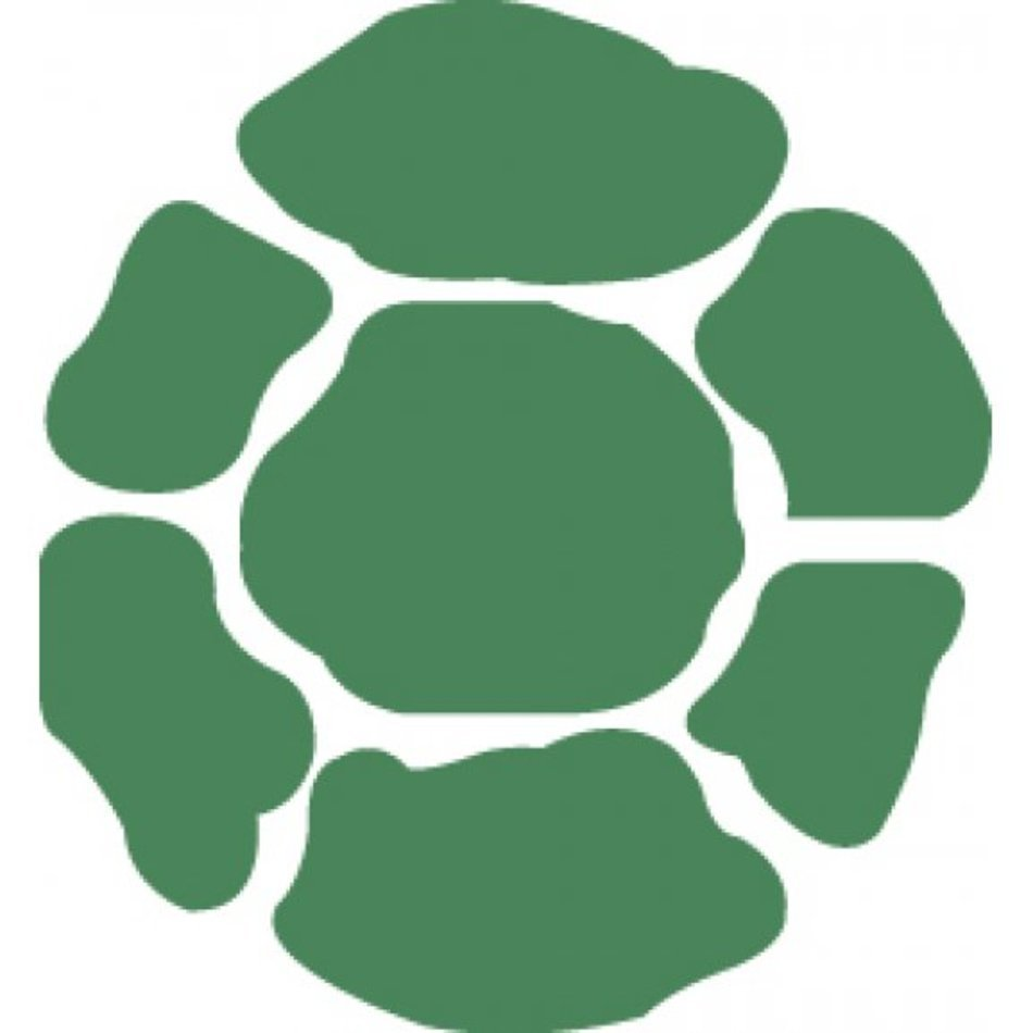 green turtle shell