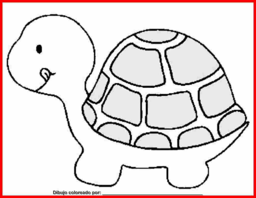 Dibujo De Tortuga Animal Marino Para Colorear Imprimir Y Pintar Free