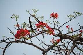 nature flower tree red branch