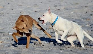 two dogs fumbling on the beach