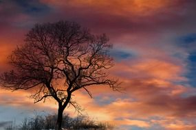 silhouette of tree in dramatic sky clouds