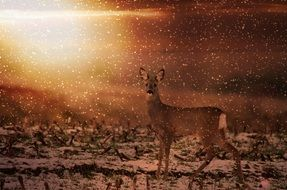 roe deer wild animal red field