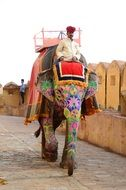 Traditional elephant trekking in Amber Palace-Fortress, India