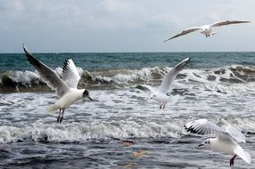 seagulls sea
