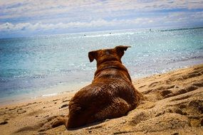 the dog is lying on the sand near the sea