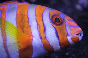 bright exotic tropical fish