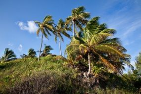 green palm trees on the island in summer day