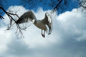 flying white seagull