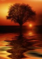 mirror reflection of a tree in the water at sunset