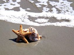 Starfish and shell on the beach