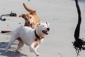 Playful dogs get funny mood on the beach
