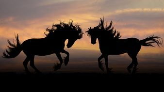Horses under the sunset