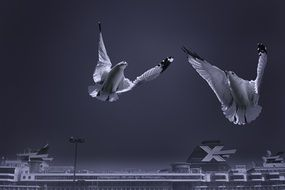 seagulls in flight over a cruise ship