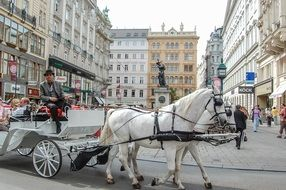 man on cab drawn by two white horses, austria, vienna
